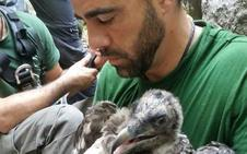 Medio Ambiente realiza el marcaje del segundo pollo de quebrantahuesos nacido en libertad en Andalucía