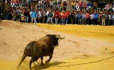 83 'toros ensogaos' en las calles de Beas de Segura