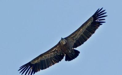 El Centro Temático de Especies Amenazadas de Cazorla supera ya la barrera de las 250.000 visitas