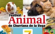 Churriana de la Vega celebrará el I Festival Animal, con concursos de belleza y habilidad para las mascotas