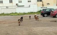 UPyD pide incluir en el presupuesto una partida para una protectora de animales