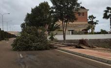 18 solicitudes de ayudas al campo almeriense por los daños de los tornados de enero