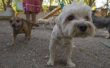 El Ejido pone en marcha el censo genético canino para «concienciar» sobre la limpieza de la vía