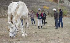Los caballos como impulso de mejora