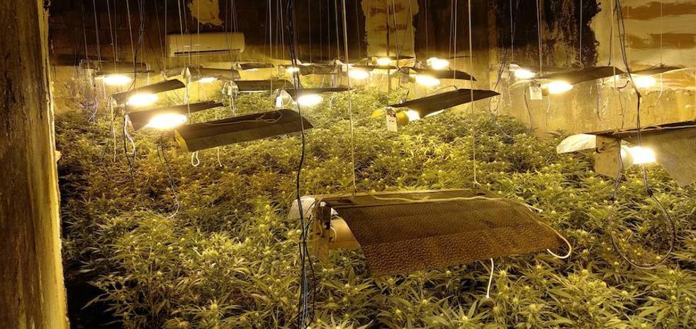 Intervienen 2.200 plantas de marihuana y detienen a seis personas en Balanegra