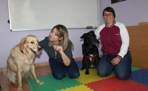 El beneficio terapéutico de trabajar con perros