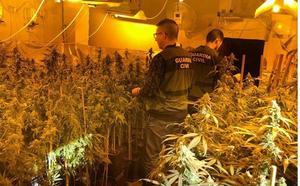 Arrestados un hombre y un menor por cultivar marihuana en el centro de El Ejido y Pampanico