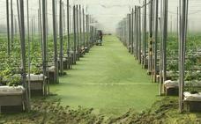 Anegadas más 40 hectáreas de invernaderos en la zona de Matagorda