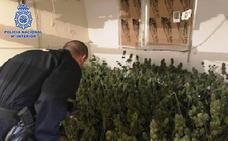 Descubren una plantación indoor en El Ejido por el fuerte hedor