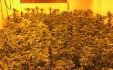 Desmantelan una plantación de marihuana en una casa de El Ejido