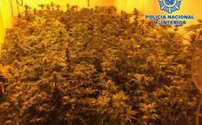 Dormían en el comedor para tener las cuatro habitaciones llenas de plantas de marihuana