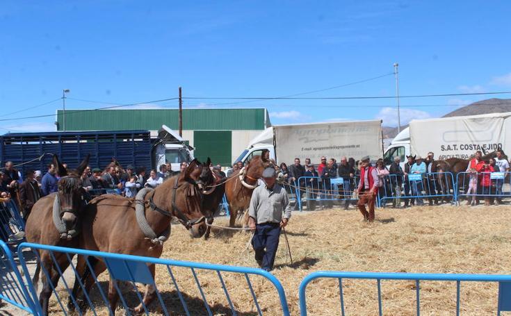 Miles de personas asisten en Tarambana a la Feria del Ganado