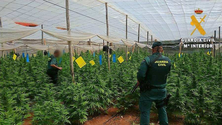Encuentran 4.000 plantas de marihuana en «sofisticados» invernaderos de El Ejido