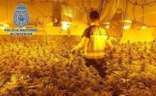 Detenidas 28 personas en El Ejido y Roquetas tras encontrar 5.000 plantas de marihuana