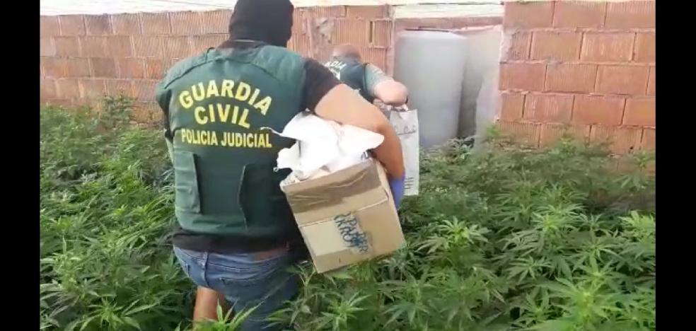 Macrooperación en Matagorda: 15.800 plantas de marihuana, seis armas, 20 detenidos y 120 enganches ilegales