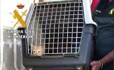 Rescatan a dos gatos cachorros e investigan a dos personas por un delito de maltrato