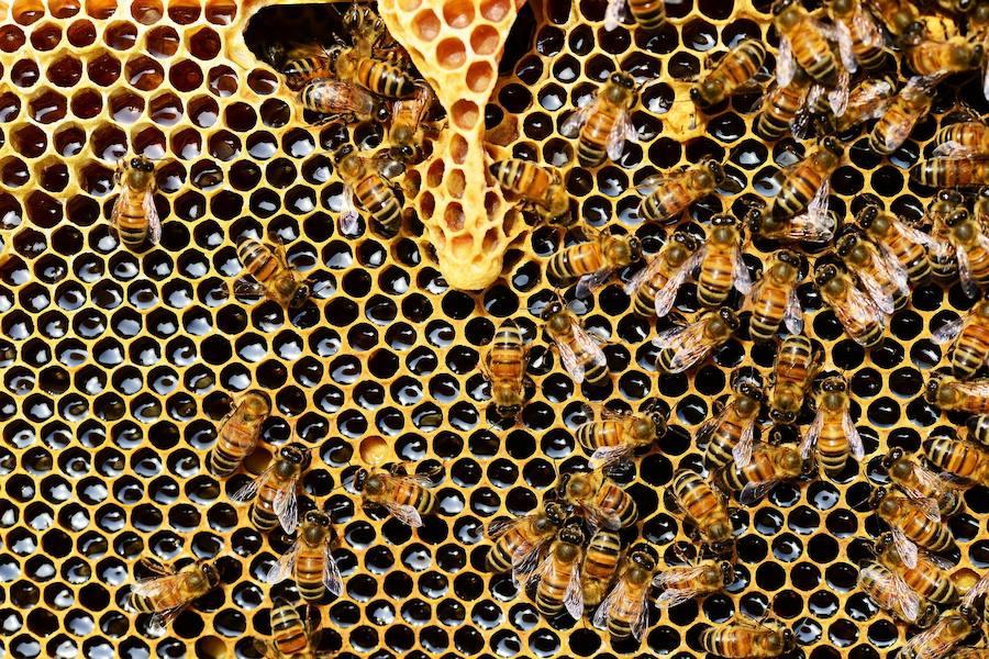 Un paseo entre mieles y compotas