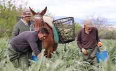 Tres recetas para disfrutar la temporada de habas y alcachofas en la Vega de Granada