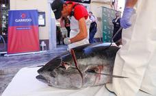 Un ronqueo histórico en el Realejo para inaugurar las I Jornadas del atún rojo de Almadraba