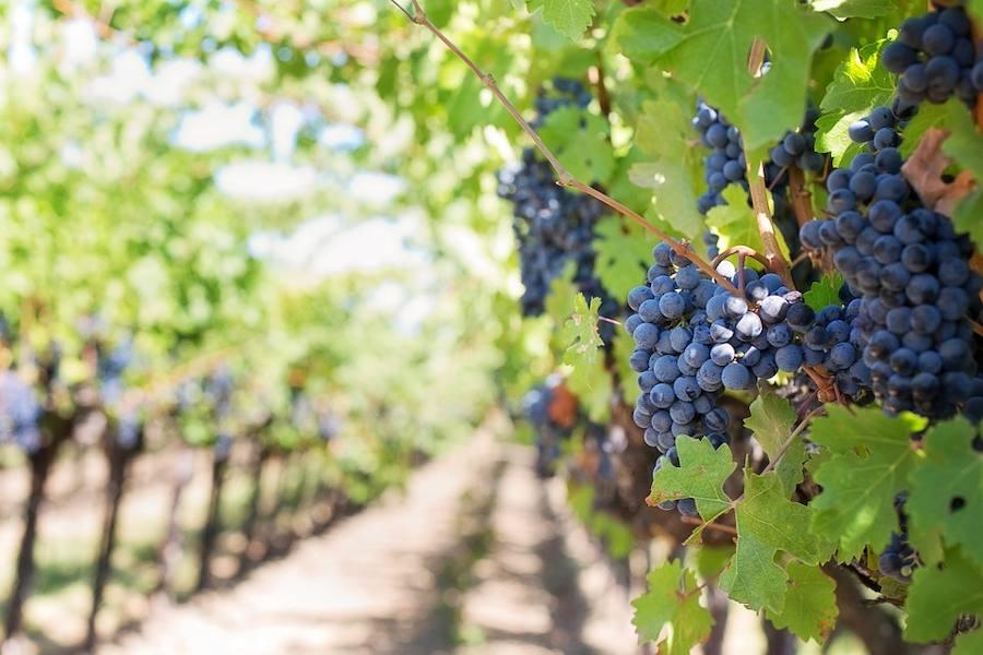 El alma primigenia de los vinos de Ronda