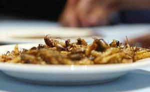 La cocina de los insectos