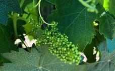Introducción a la viticultura