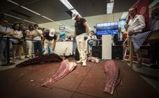 Así 'ronca' el atún rojo de almadraba en Granada