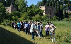 'Una huerta atrás' y 'Juntas somos un bosque' visitan las Huertas Medievales del Generalife y las Huertas Sociales de Peligros