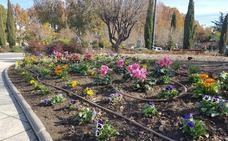 Flores de temporada embellecen la Plaza de las Américas