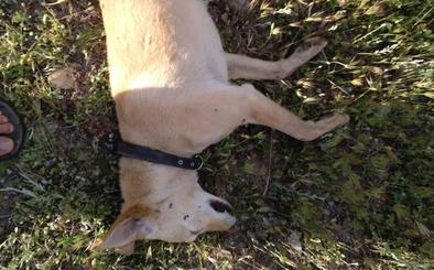 «Casi me cazan...»: un vecino de Aldeire narra cómo tirotearon a sus perros cuando corría con ellos por el monte