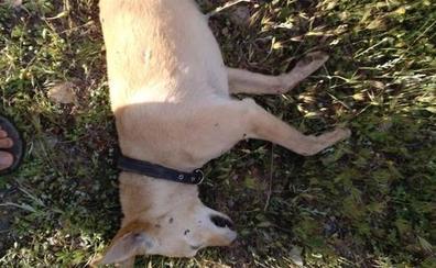 Identifican al individuo que disparó a los perros de un hombre que iba haciendo ejercicio en Aldeire
