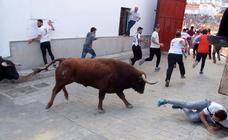 Las mejores fotos de los encierros taurinos de La Peza