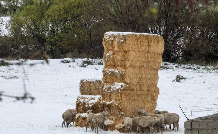 Nieva en el Marquesado del Zenete