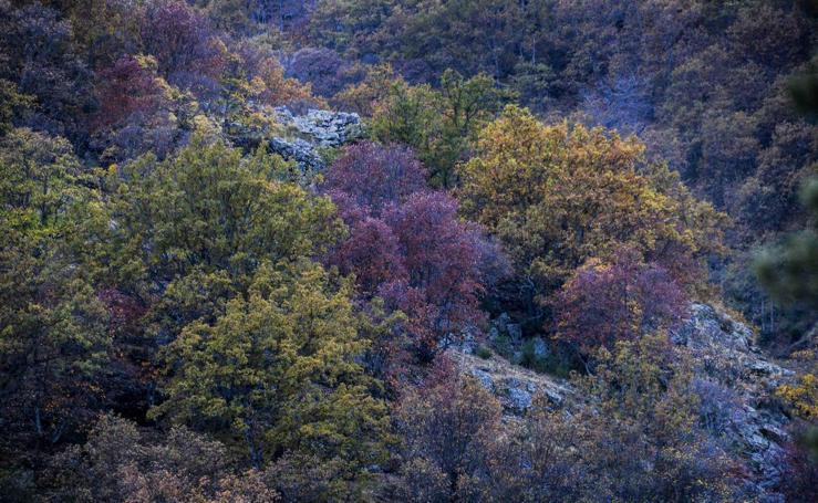 El bosque encantado de Lugros, una maravilla del otoño granadino