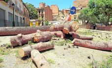 Talan los pinos de Guadix pese a las quejas vecinales