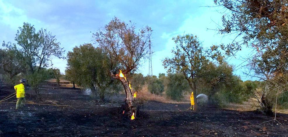 El incendio en Los Rebites arrasó un centenar de olivos