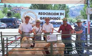 Más de 500 personas visitan la Feria Agroganadera de Monachil