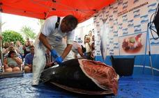 Más de 200 kilogramos de atún, pieza a pieza