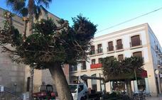 El Ayuntamiento de Vera poda los árboles de la plaza Mayor «por motivos de seguridad»