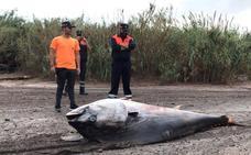 Aparece un gran atún muerto en una zona costera de Pulpí