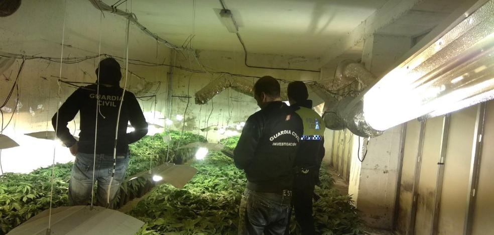 Localizan 1.080 plantas de cannabis en una nave de Loja