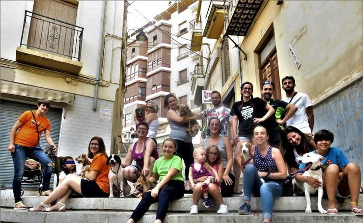 SOS Animalicos, cuatro años al rescate de los 'peludos' sin techo