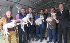 La oveja ecológica lojeña reivindica su excelencia gastronómica y aportación ambiental