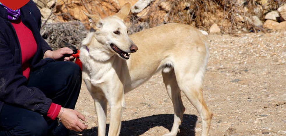 Piden ayuda para encontrar a Esteban, un perro que estaba a punto de ser adoptado