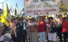 Moclín se moviliza para defender al sector olivarero, fundamental para los vecinos