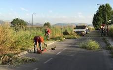 El Ayuntamiento realiza trabajos de jardinería y prepara los espacios públicos