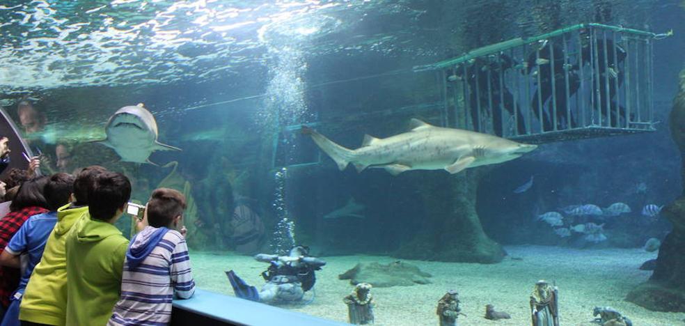 Senator Hotels compra la mayor parte de la propiedad del Aquarium de Roquetas