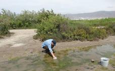 Un vertido de aguas residuales podría estar detrás de la proliferación de mosquitos en la zona de Las Salinas