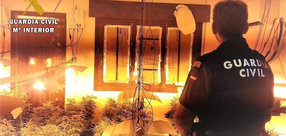 Detenida una persona en una operación que permitió la incautación de 526 plantas de marihuana