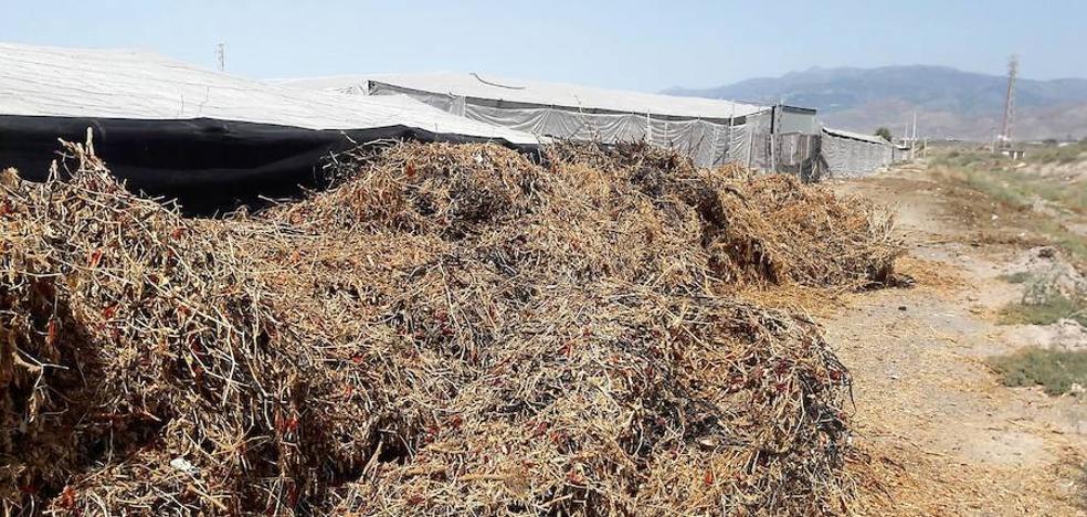 Cs exige soluciones «inmediatas» para los residuos agrícolas y una nueva Ordenanza